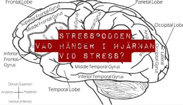 13.Stresspodden-den-stressade-hjarnan